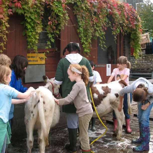 Children cleaning the animals
